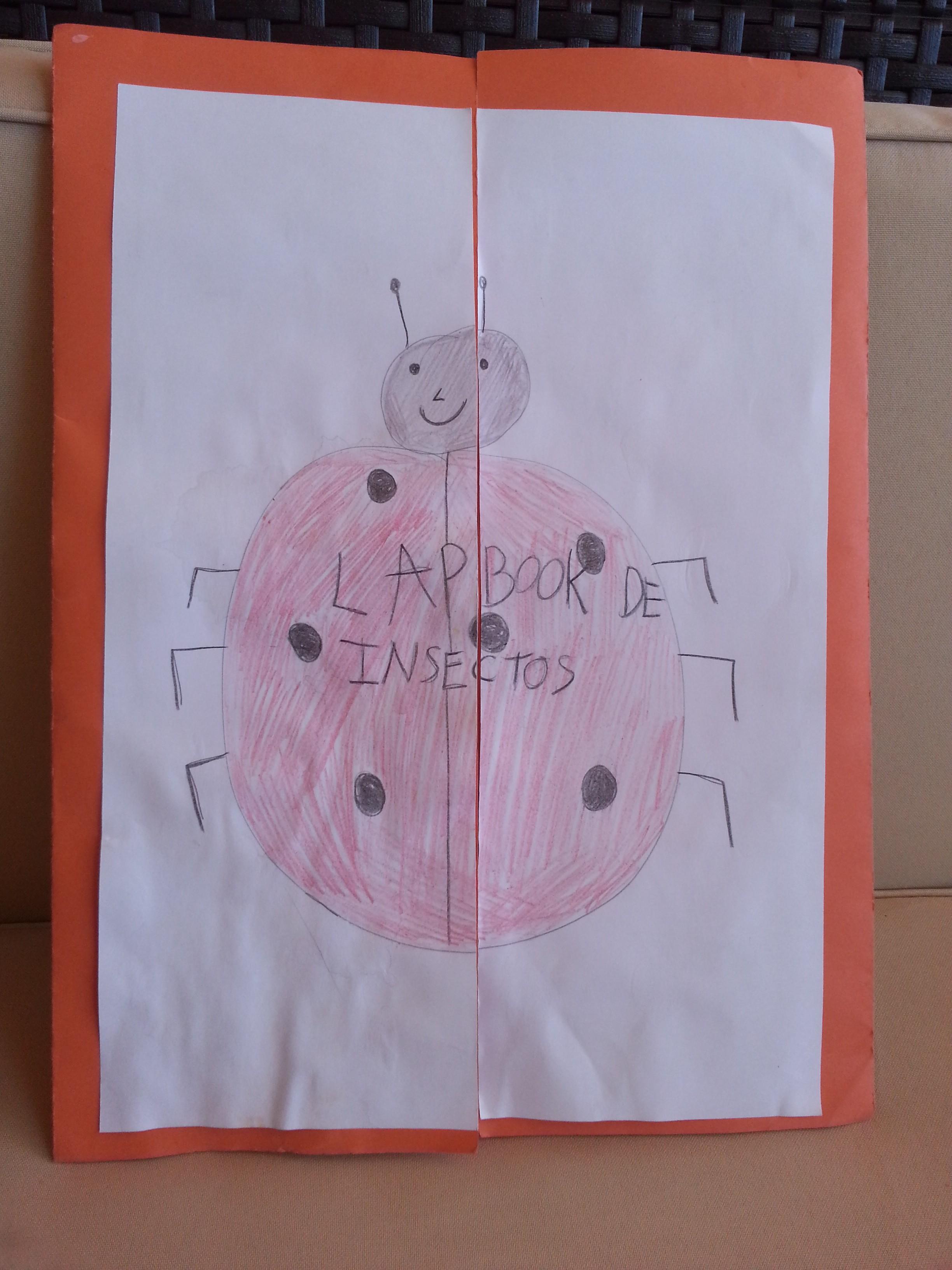 Nuestro lapbook de insectos – Maternidad Continuum