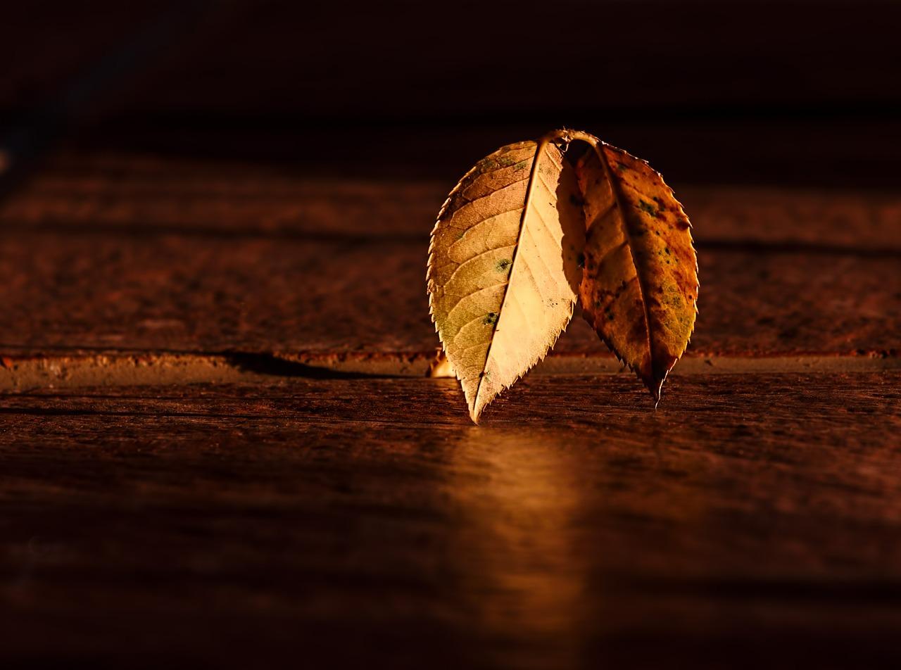 15 cosas que nos hacen disfrutar del otoño como si fuera verano