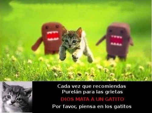 purelan_gatito
